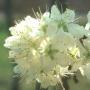 virág, allergia, allergiás, nátha